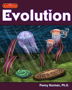 Ediacaran to Cambrian Explosion