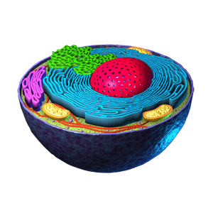 Parts of the Cell
