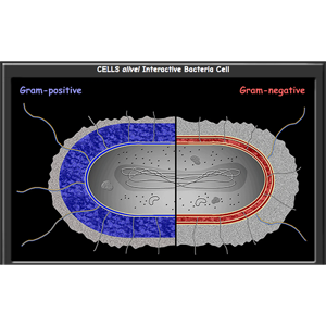 Bacterial Cells Interactive