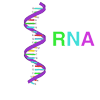 Making Proteins from mRNA