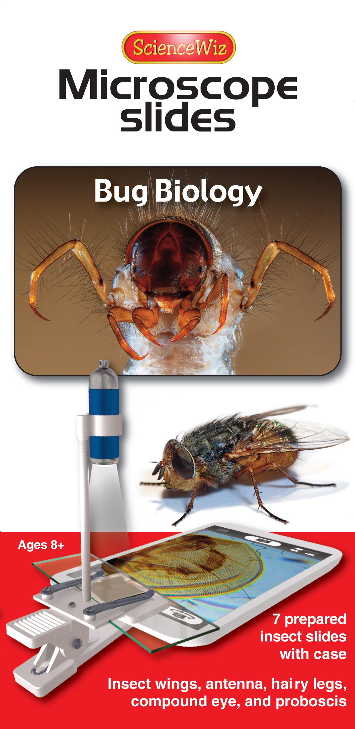 Microscope Slides: Bug Biology