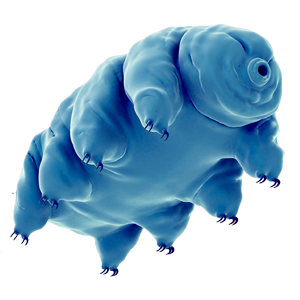 More About | Water Bears