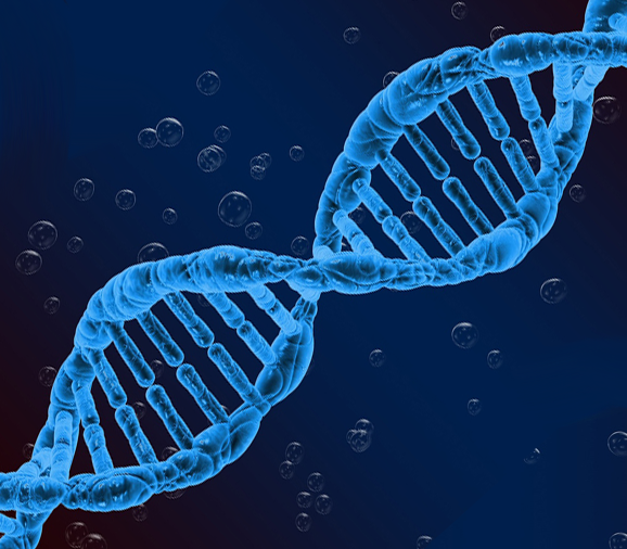 DNA Workbook Links